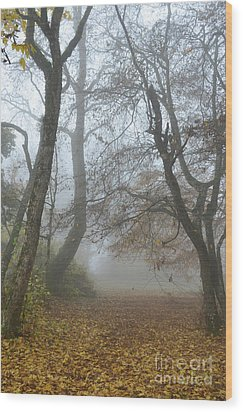 Fogy Forest In The Morning Wood Print by Bruno Santoro