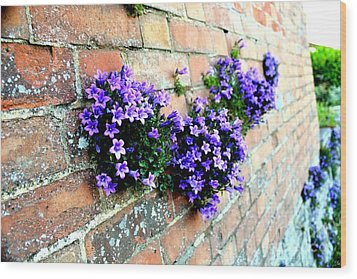 Follow The Flower Brick Wall Wood Print by Rene Triay Photography