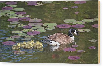 Wood Print featuring the photograph Follow The Goose by Mary Zeman
