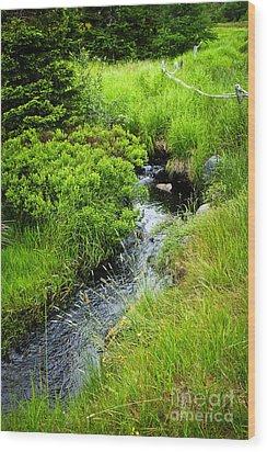 Forest Creek In Newfoundland Wood Print by Elena Elisseeva