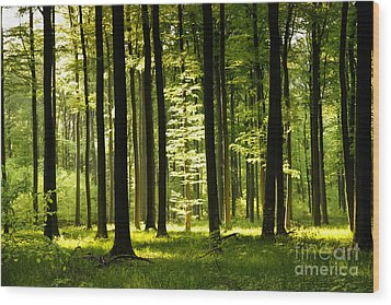 Forest Idyll Wood Print by Renate Knapp