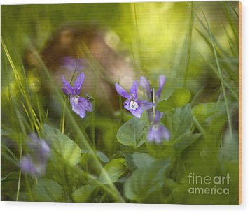 Forest Meadow Wood Print by Angel  Tarantella