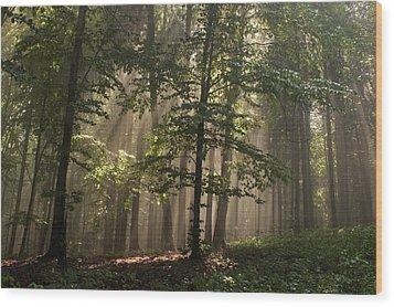 Forest Wood Print by Odon Czintos