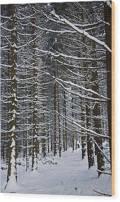 Forest Of Marburg In Winter Wood Print by Axiom Photographic
