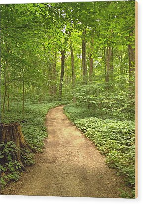 Forest Path Wood Print by Coby Cooper