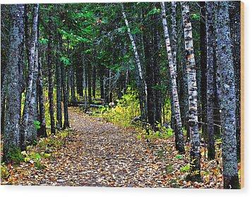 Forest Path In Autumn Wood Print by Matthew Winn