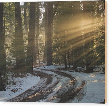 Wood Print featuring the photograph Forest Road by Irina Hays