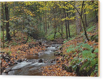Forest Stream In Autumn Wood Print by Stephen  Vecchiotti
