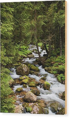Forest Stream In Tatra Mountains Wood Print by Artur Bogacki