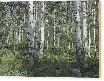 Forever Aspen Trees Wood Print by Madeline Ellis