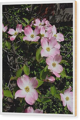 Forever Dogwood Wood Print by Frank Wickham