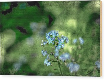 Forget-me-not Grunge Wood Print by Darren Fisher