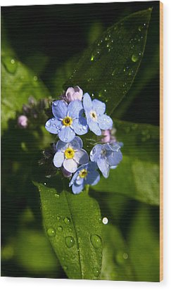 Forget Me Not Wood Print by Ralph A  Ledergerber-Photography