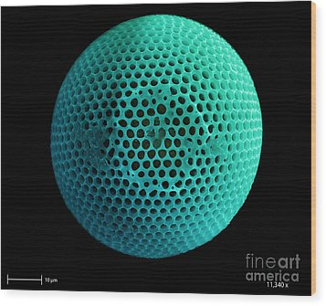 Fossil Diatom, Sem Wood Print by Ted Kinsman