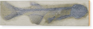 Fossil Fish, Sem Wood Print by Steve Gschmeissner