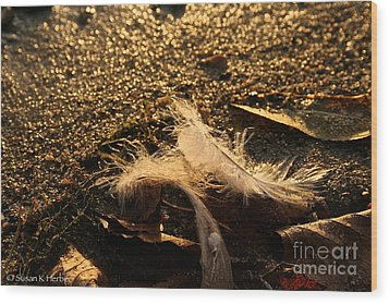 Found Feathers Wood Print by Susan Herber