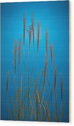 Fountain Grass In Blue Wood Print by Steve Gadomski