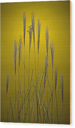 Fountain Grass In Yellow Wood Print by Steve Gadomski