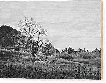 Wood Print featuring the photograph Fountain Valley In Black And White by Cheryl McClure