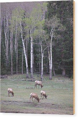 Four Elk   Four Aspen Wood Print