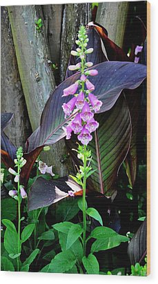 Wood Print featuring the photograph Foxglove by Helen Haw