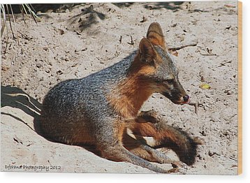 Wood Print featuring the photograph Foxie by Debra Forand