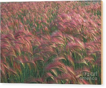 Wood Print featuring the photograph Foxtail Barley by Doug Herr