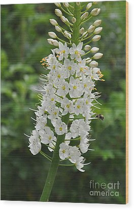 Wood Print featuring the photograph Foxtail Lily by Tanya  Searcy