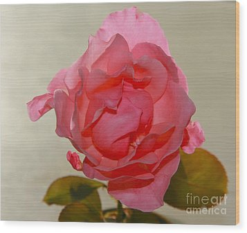 Fragile Pink Rose Wood Print