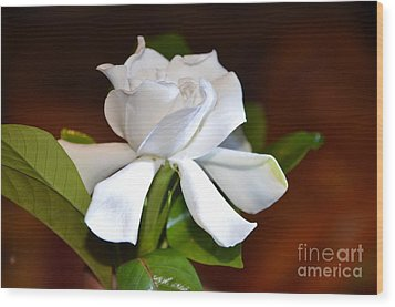 Fragrant Flower Wood Print by Jiss Joseph