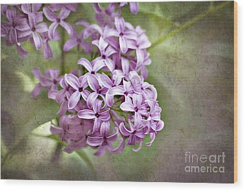 Fragrant Purple Lilac Wood Print by Cheryl Davis