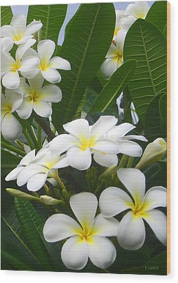Wood Print featuring the photograph Fragrant White Plumeria by Kerri Ligatich