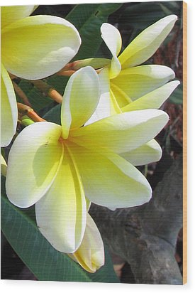 Frangipani Up Close Wood Print