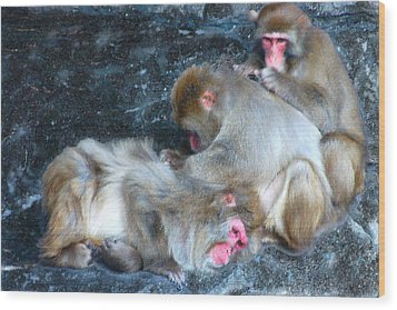 Wood Print featuring the photograph Free Buffet And Grooming by Sarah McKoy