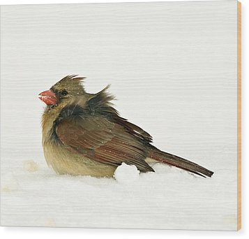 Freezing Cardinal Wood Print by Trudy Wilkerson