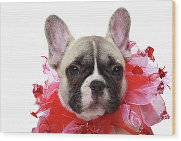 French Bulldog Puppy Wood Print by Mlorenzphotography
