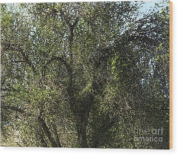 Fresco Tree Wood Print