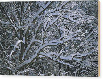 Fresh Snowfall Blankets Tree Branches Wood Print by Tim Laman