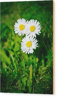 Friendly Daisy Wood Print by Ruth MacLeod