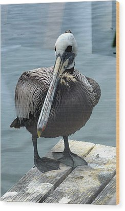 Wood Print featuring the photograph Friendly Pelican by Carla Parris