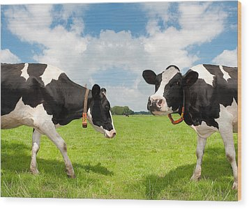 Frisian Cows Wood Print by Hans Engbers