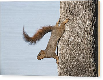 Frisky Little Squirrel With A Twirly Tail Wood Print by Bonnie Barry