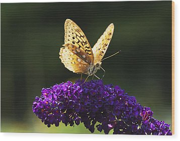 Fritillary Butterfly On Butterfly Bush, Near Madoc, Ontario, Canada Wood Print by Janet Foster