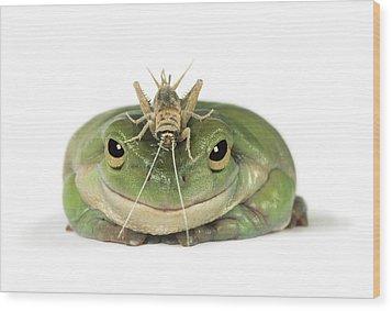 Frog And Grasshopper Wood Print by Darwin Wiggett