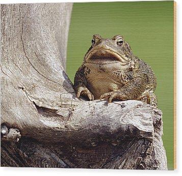 Frog Wood Print by David Lester