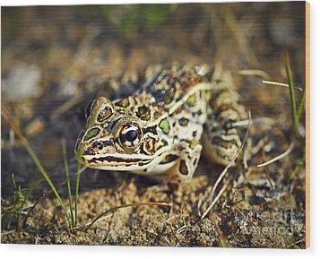 Frog Wood Print by Elena Elisseeva