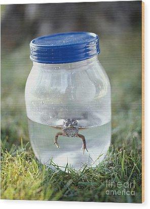 Frog In A Jar Wood Print by Adam Crowley