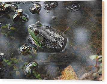 Frog In The Millpond Wood Print by Kay Lovingood