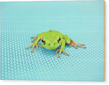Frog Italy Wood Print by Rhys Griffiths Photography