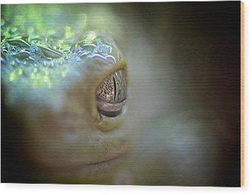 Frog Macro Wood Print